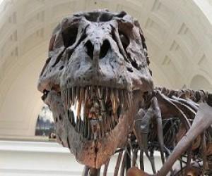nekotorye-dinozavry-xodili-na-cypochkax